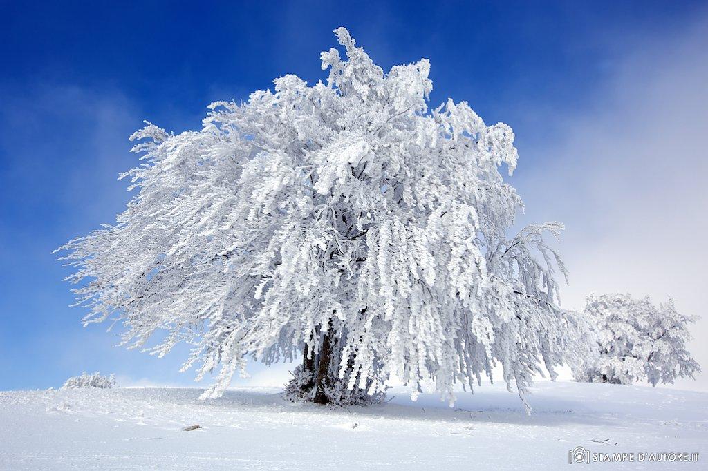"""""""Frozen"""
