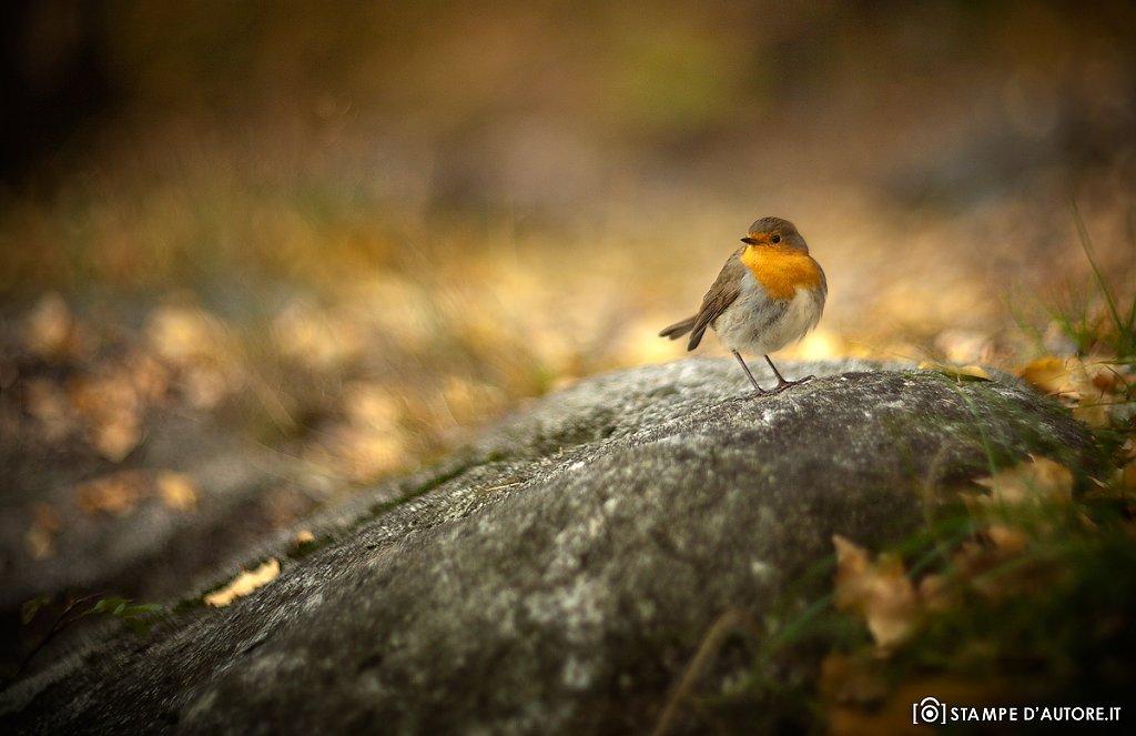 """""""Hi, Robin"""