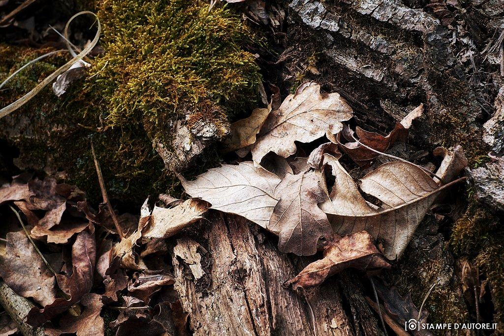 """""""L'autunno"""